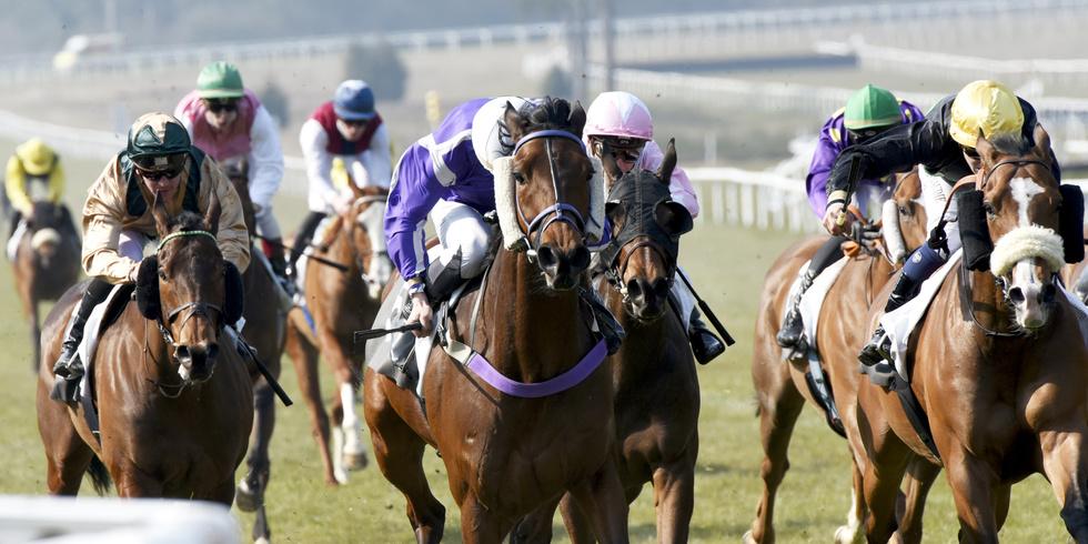特別登録期待値の高い馬 3月7日・3月8日