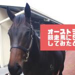 オーストラリアはタスマニアで競走馬に出資して5%馬主となりました