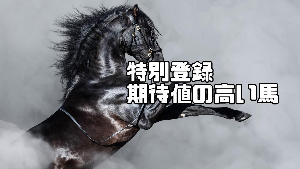 特別登録期待値の高い馬 11月21日・11月22日・11月23日